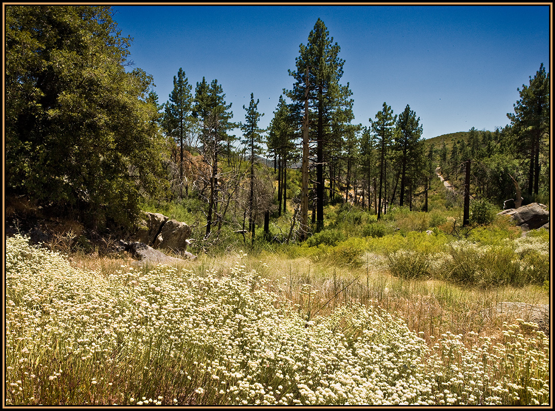 cleveland national forest Cleveland national forest occupies most of the central third of san diego county  its 567000 acres stretch from the northern county line to within a few miles of.
