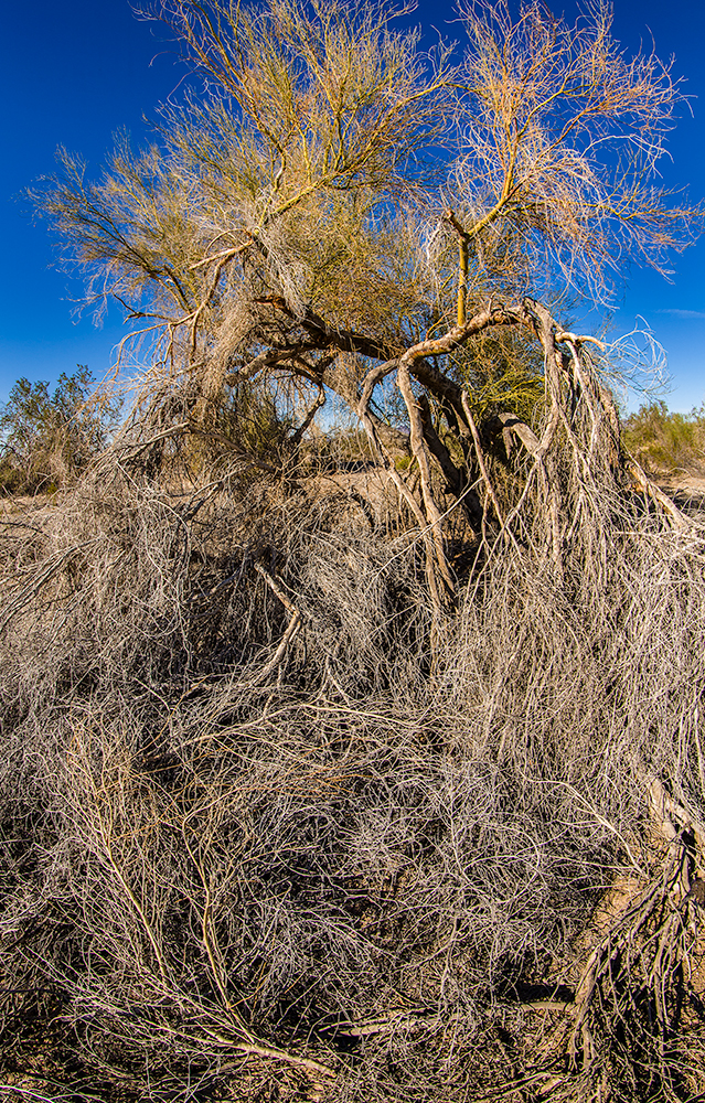 This poor sad old tree could no longer hold its branches high to worship the sun or wave to the moon.  Now it looked like it was sorely in need of a haircut.  Canon 5D Mk II w/ 8-15mm Fisheye
