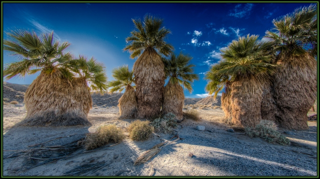 17 Palms Oasis.  Canon 5D MkII w/ 8-15mm lens.