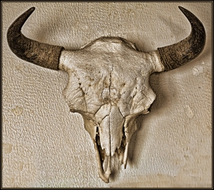 Bull Buffalo skull over the fireplace at my friend Jim's house in New Mexico.