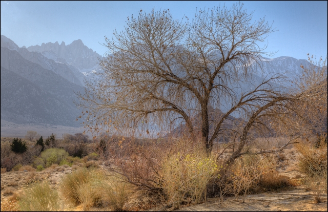 Tree at the corssroads of Whitney Portal road and Movie Road in Alabama Hills