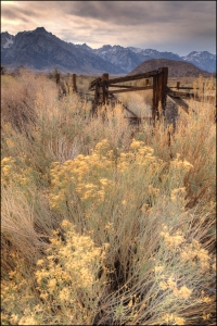 This old corral has been a favorite subject for years.  Now it is nearly overtaken by the weeds.