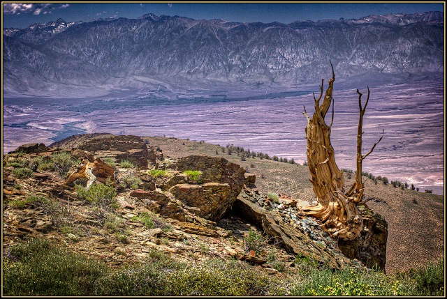 Standing guard on a ridge line several thousand feet above the valley floor, an old sentinel is still loyally at its post.
