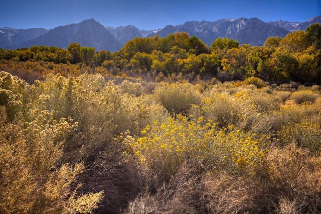 Fall color along the Moffat Ranch Road.  Canon 5D Mk II with Canon 24mm TS/E lens.