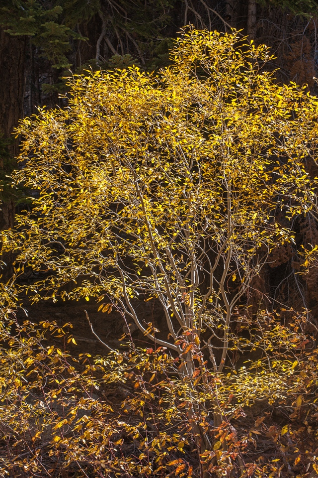 A streak of sunlight illuminated this tree against the dark hillside and waited for me to shoot it, then the sun went behind a cloud.  Wow.