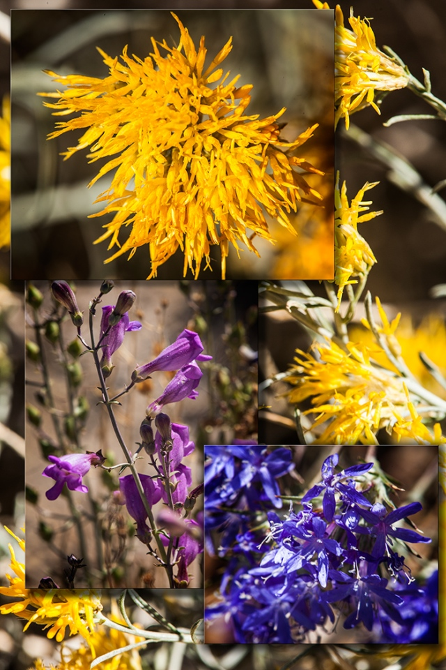 A photo collage of some late blooming wildflowers on the flanks of Mt. Lone Pines.  All are shot with the Canon 5D <k II and a Tamron 180 macro lens.