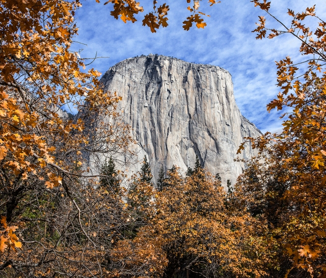 On a crispp fall morning I saw El Capitan framed by oaks about to lose their leaves and go to sleep for the winter.