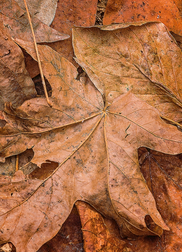 Close up of leaves on the ground near Fern Springs.
