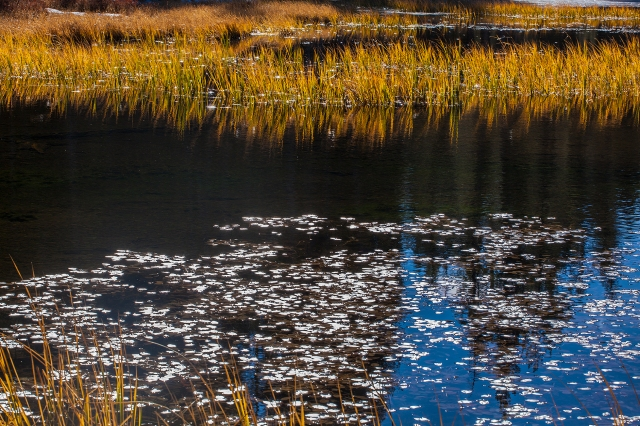 This composition seemed very quiet and peaceful as it contrasted the specular highlights on the floating leaves with the waiving reeds along the top.