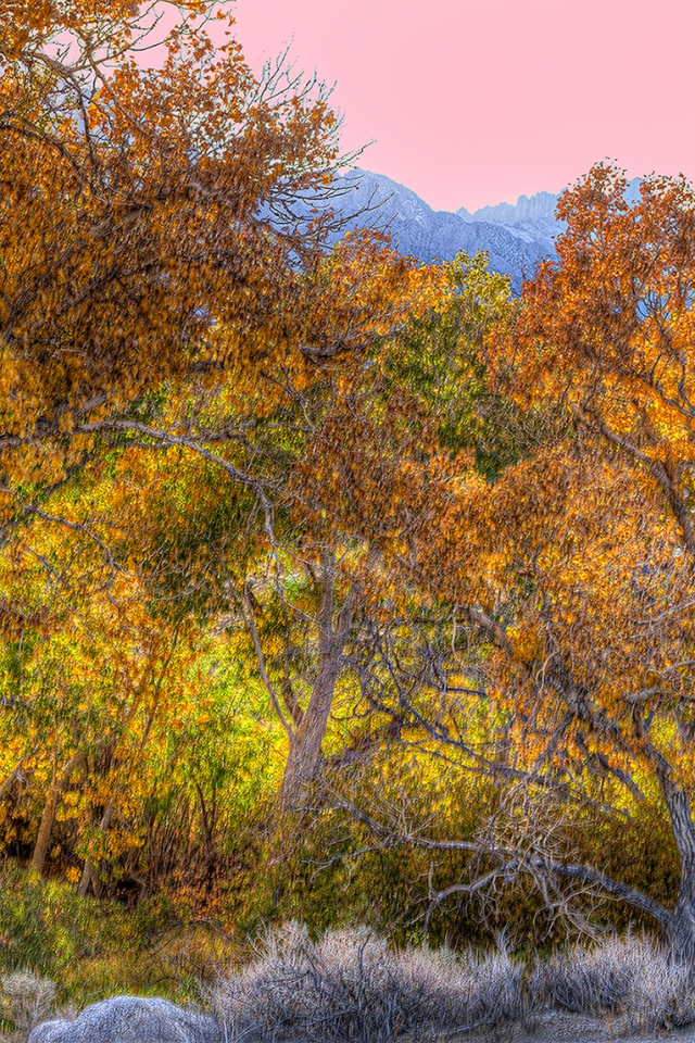 Late afternoon light turns the haze in the sky to pink and brings a backlight glow to the fall colors along Movie Road in the Alabama hills near Lone Pine, CA.  Canon 5D MkII with Canon 85mm f1.8 @ f11 (handheld HDR)