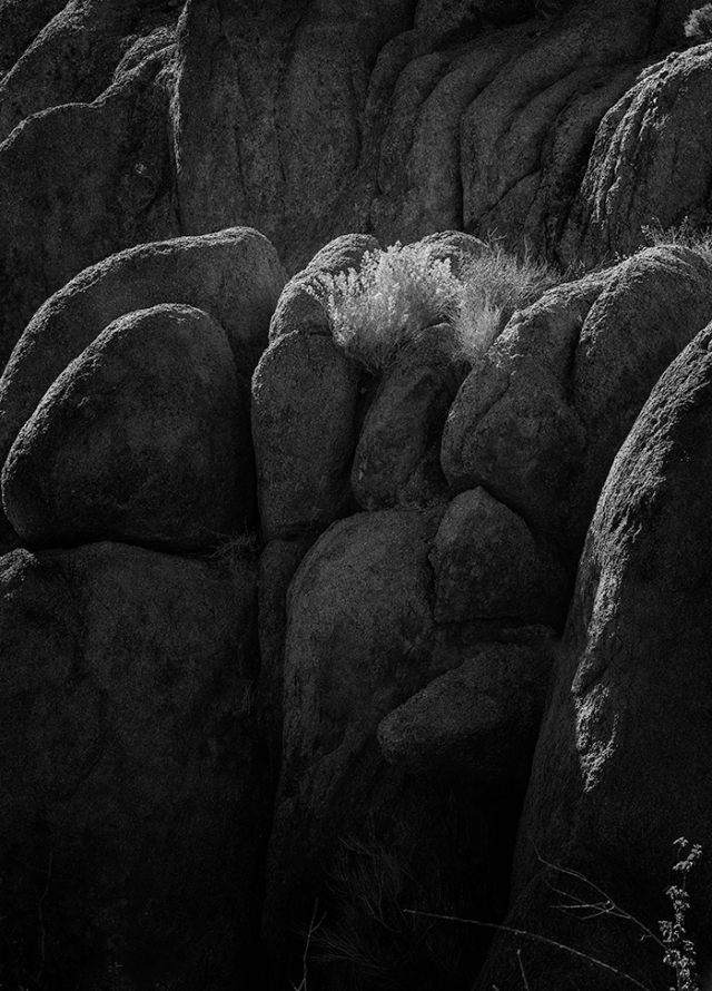 B&W conversion of grass and rock detail.