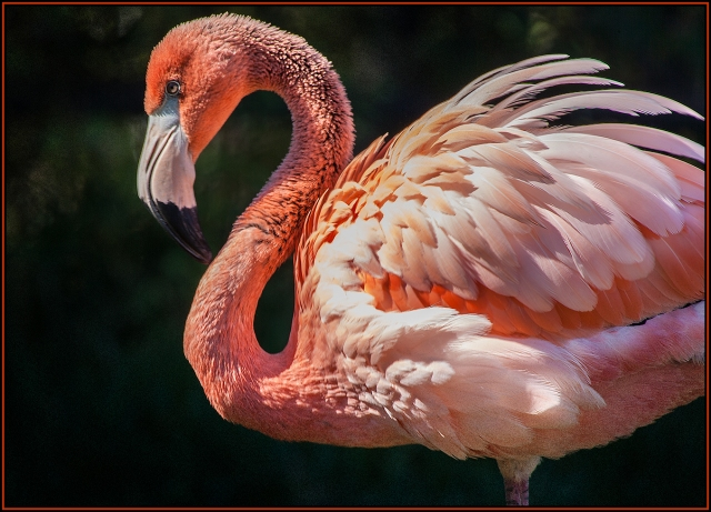 Flamingo, handheld at 500 mm with 1/50 second shutter.