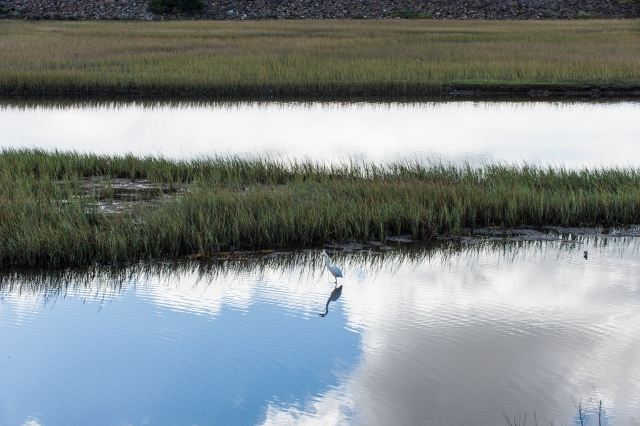 "A ""normal"" 50mm shot of the San Diego River estuary with one of the herons (I think) fishing in the shallow water."