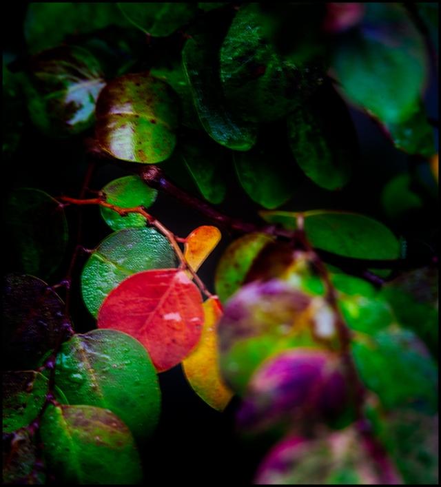 Red Leaf 02