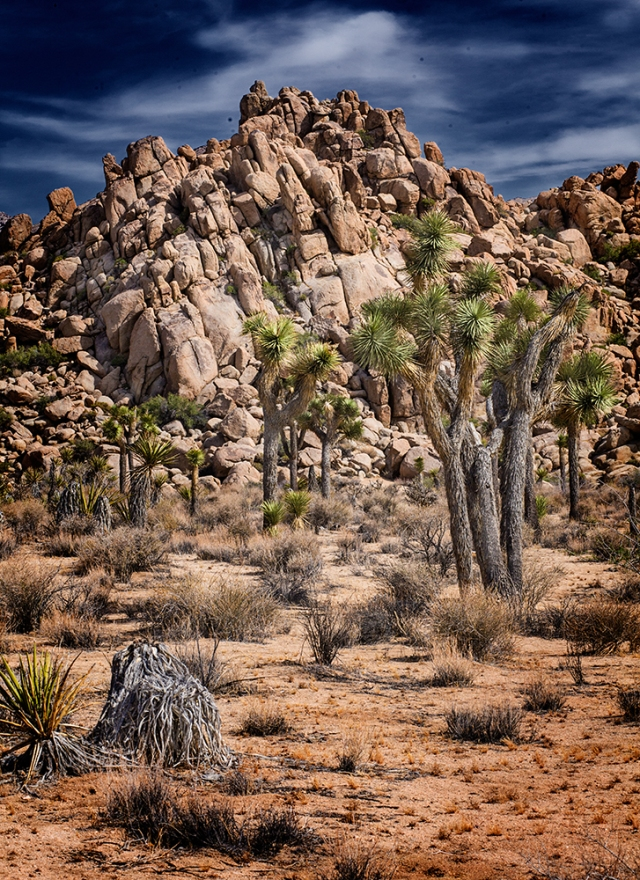 Joshua Trees and Rocks 01