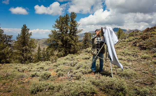 Participant in Bristlecone Pines workshop setting up a Korona 7 x 17 panorama camera overlooking the Sierras from the White Mountains.