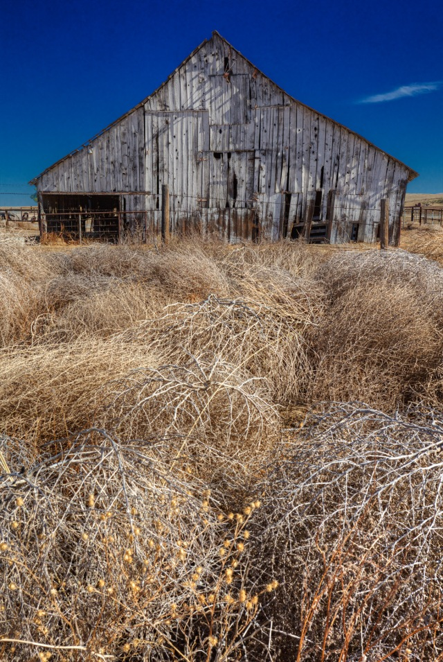 Barn and tumbleweed near the Carizzo Valley.