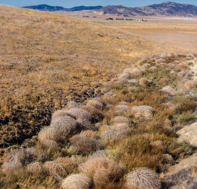 Dry creek filled with tumbleweeds on the Corizzo Valley.