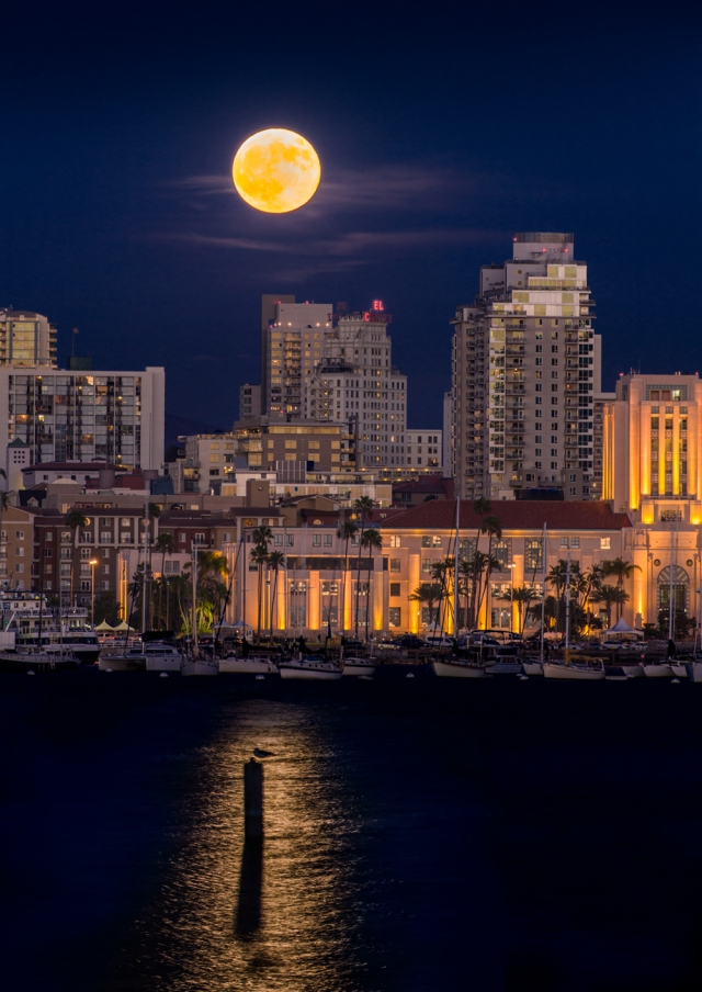 A gull has a front row seat to the super moon over San Diego waterfront and City Hall