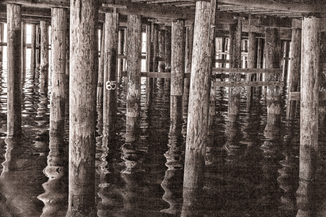 Under the pier at San Luis Bay. I do not know what the 85 on the piling means.