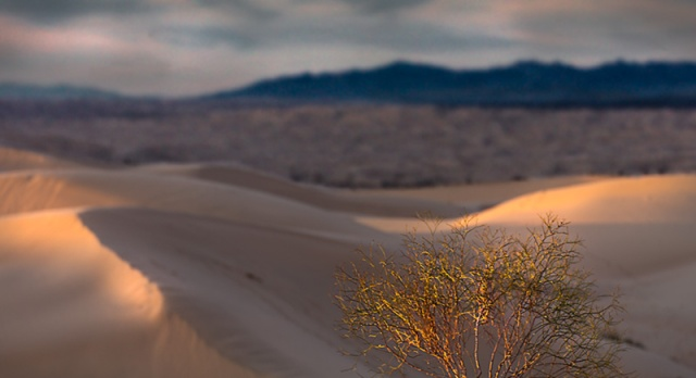 As the sun sets it painst shapes and forms on the dunes and desert bushes