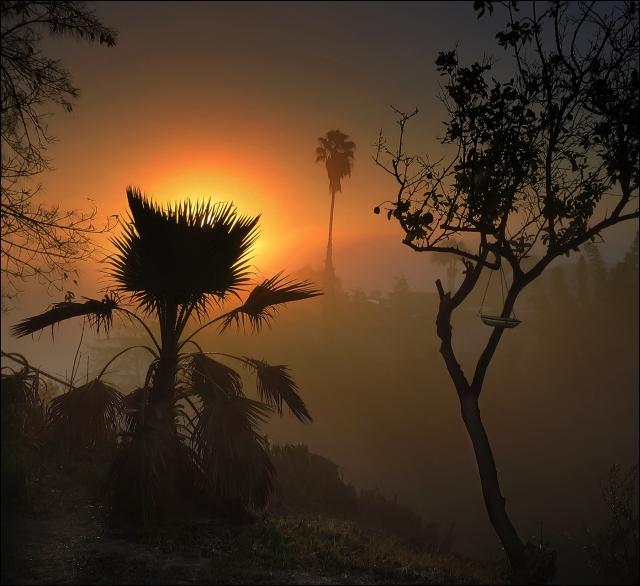 foggy-morning-for-blog