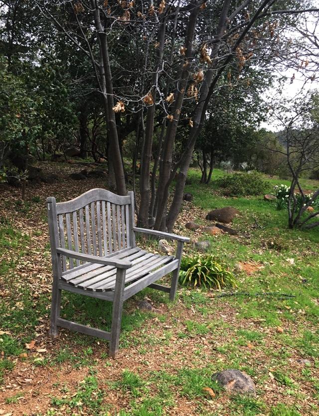 blog bench