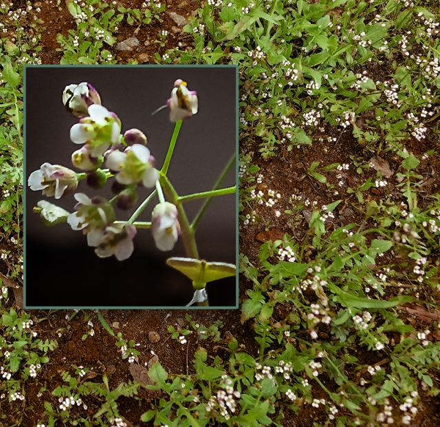 Blog Small white flowers composite