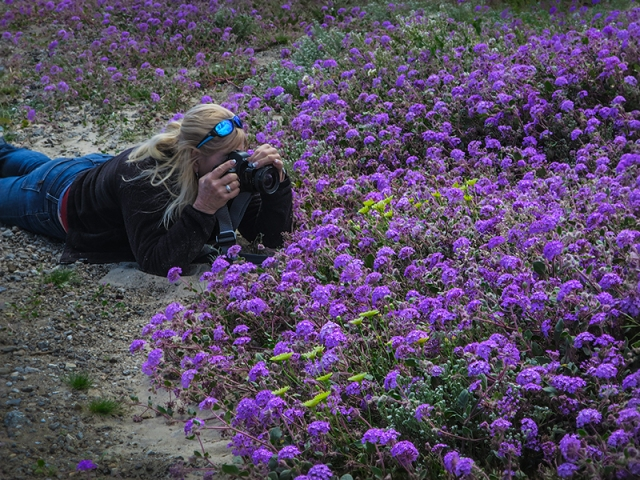 Cynthia shooting Borrego flowers for blog